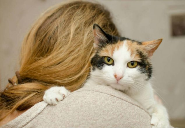 do pets pose a risk to pregnant women